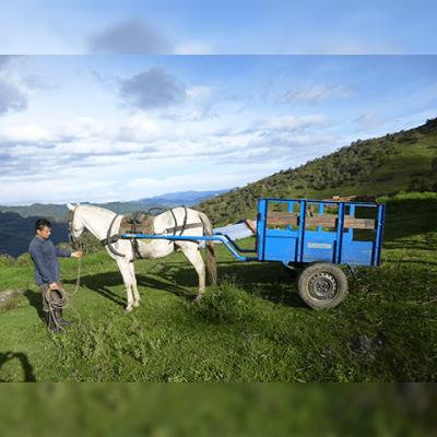Carreta caballos